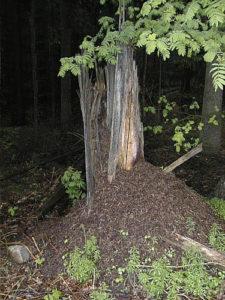 Ameisenbau